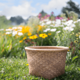 Fonda Neal Natural Health - Sunday Basket